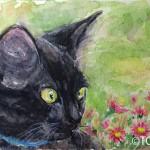 黒猫PortraitⅣ